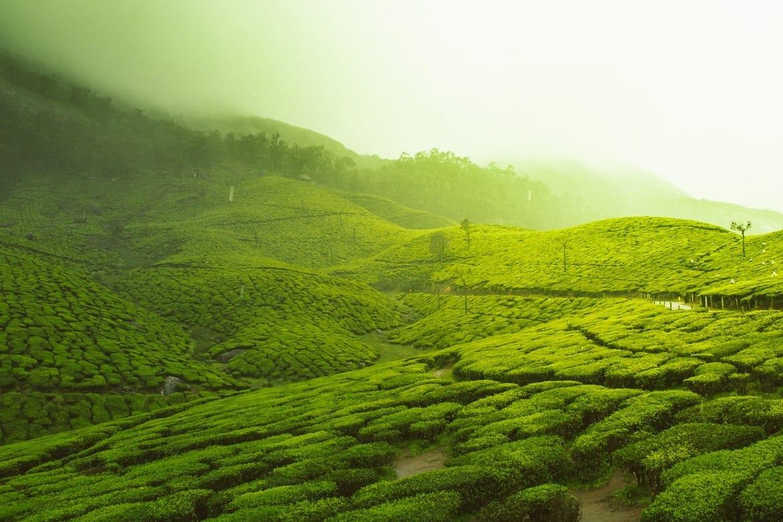 Kerala, India in September