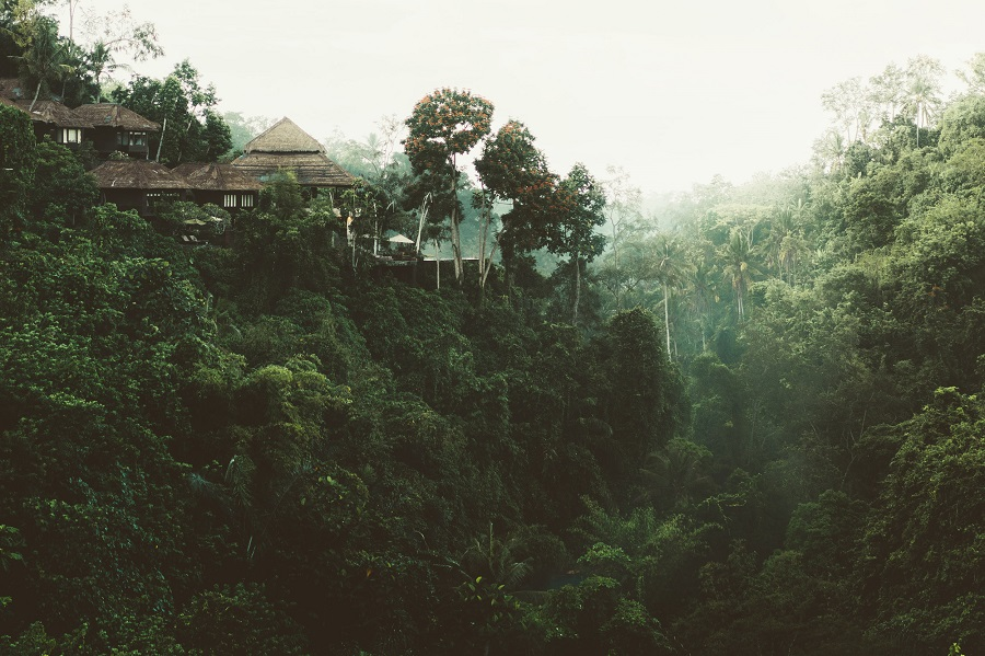 Sri-Lanka Village Forest